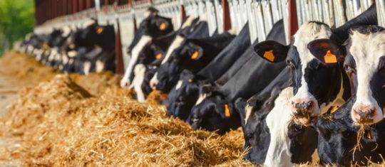 Acheter des produits alimentaires pour bovins