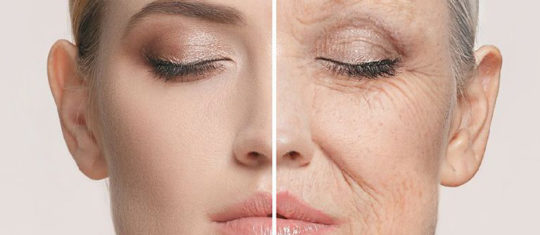 Stopper le vieillissement grâce à la télomérase
